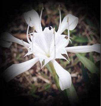 Burjtowerrealflower_3