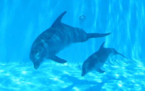 Picturesofbabydolphins480